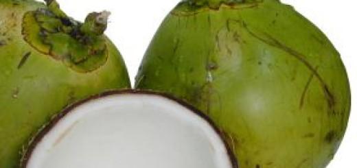 286865_coconuts_1